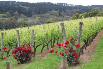 Paringa-Estate-Mornington-Peninsula-11