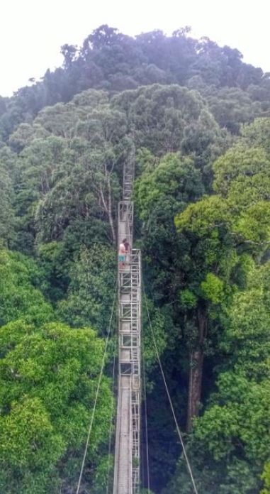 The rainforest canopy walk from the top (one of the others took my phone with them and took a photo)