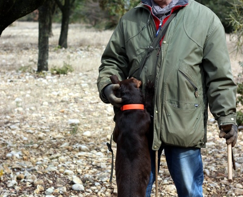 Truffle Hunting with Crillon Le Brave in Provence, France