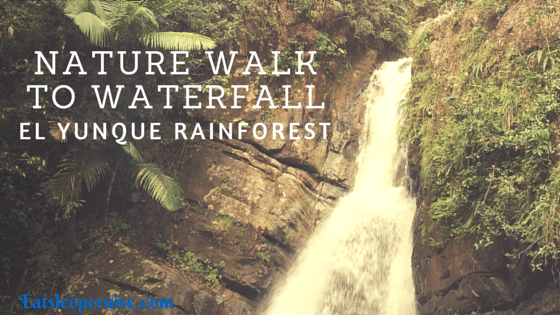 El Yunque Rainforest Tour – Rainforest Nature Walk to Waterfall Review