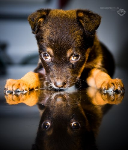 Isolated puppy lying on examination table