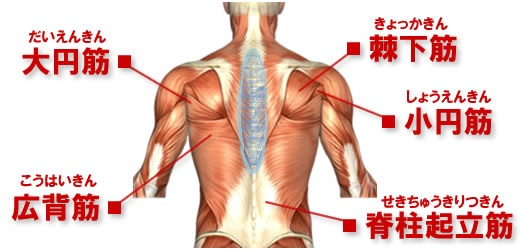 back-muscle-map1