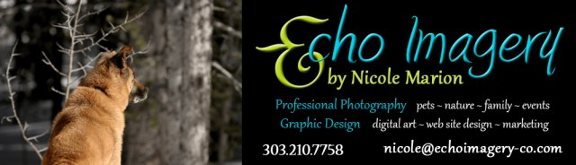 2016 Page Header-Echo-New