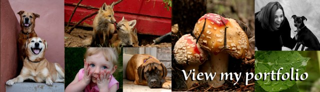 ViewPortfolio2