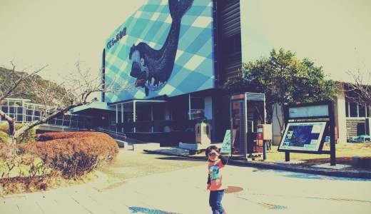 太地町のくじら博物館はコスパ最高!イルカショーや水族館もあって満足度がハンパない