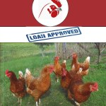capital for your poultry farm