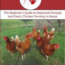 Beginner's Guide to Improved Kienyeji