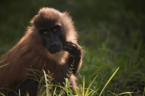 Simio Semana de la Biodiversidad 2015