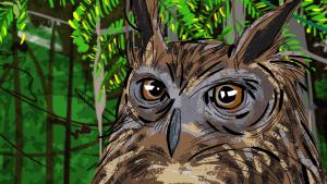 búho marrón