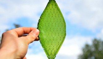 Silk Leaf. La primera hoja sintética capaz de generar oxígeno