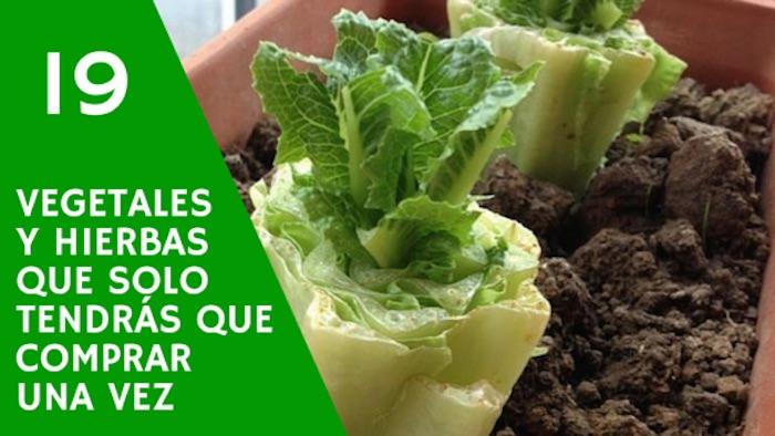 19 vegetales y hierbas que solo tendras que comprar una - Como plantar marihuana en casa paso a paso ...