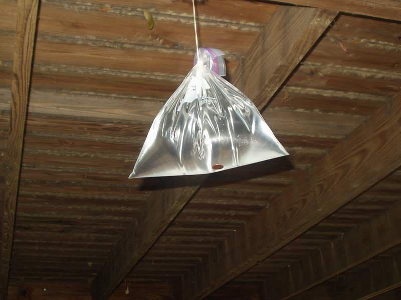 Bolsas de plástico transparentes antimoscas y mosquitos