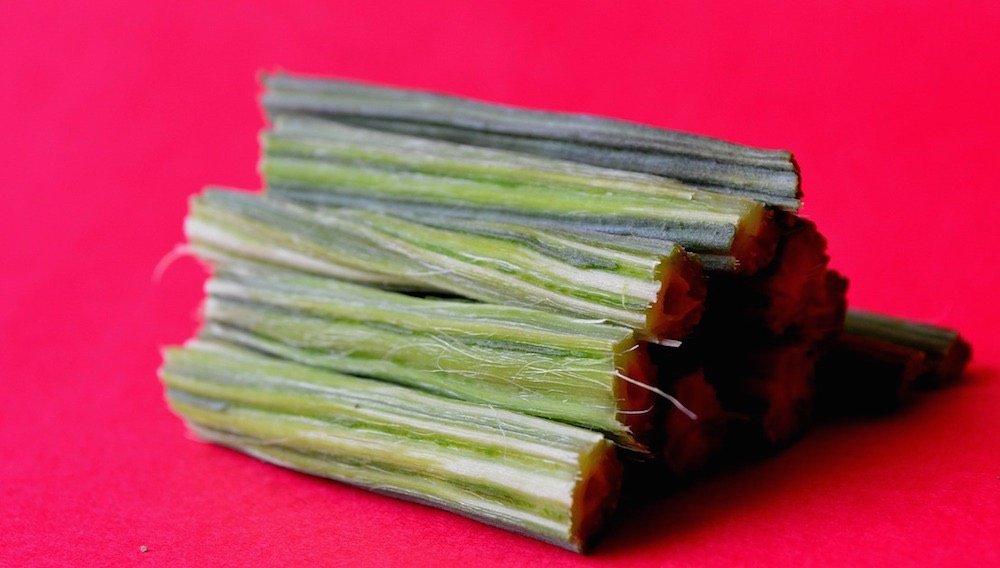Moringa, el árbol que podría acabar con hambre en el mundo