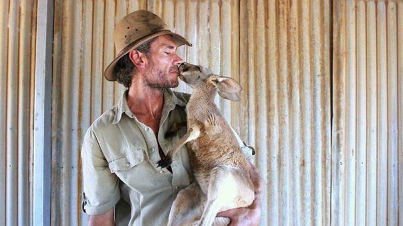 Canguro Dundee. El hombre que cuida de los canguros huérfanos en Australia