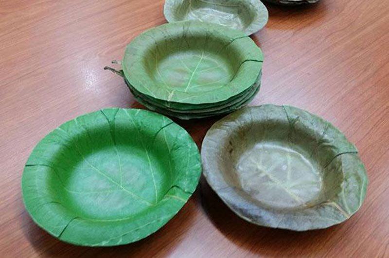 Investigadores tailandeses crean platos desechables hechos de hojas