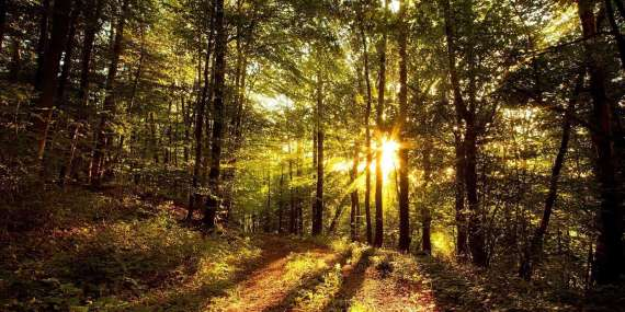 sunlight-on-trees-wallpaper-1