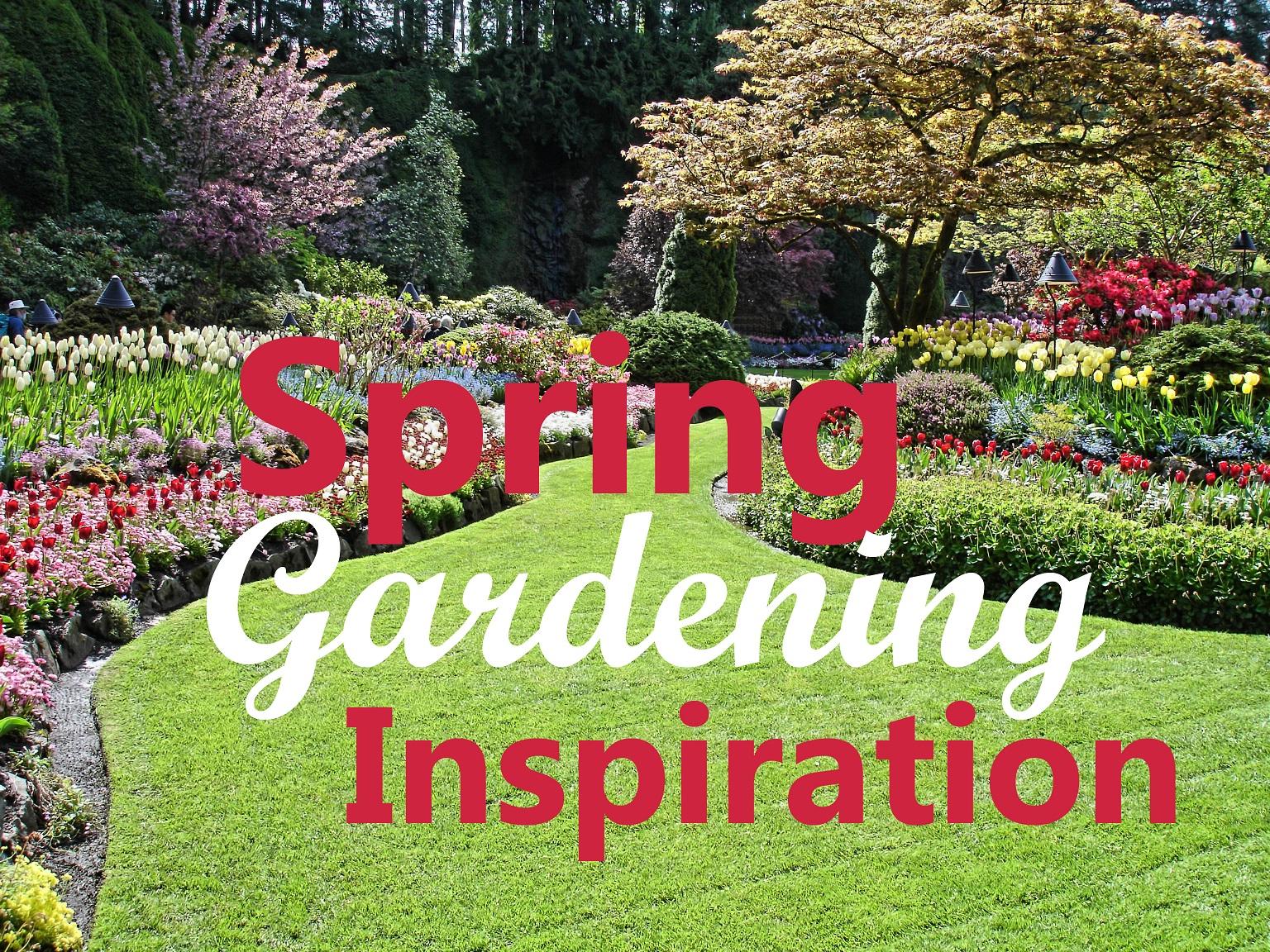 Shapely Landscape Design Ideas Your Backyard Institute Backyard Gardening Blog Your Backyard Landscape Design Ideas outdoor Backyard Gardening Blog