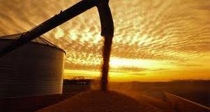 atardecer mercado de granos