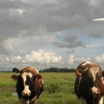 Regenerative Energie vom Bauernhof?