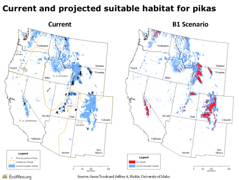 Current and projected suitable habitat for pikas