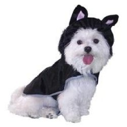 Animal Costume Lg Cat