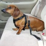 Harness Dog Car Safety Seat Belt system