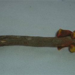 Camel, Hand Carved & Painted Twig Pencil 2 Pack