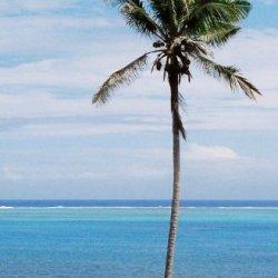 Silktail: A Fiji Ecothriller