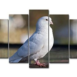 5 Piece Wall Art Painting White Dove Pictures Prints On Canvas Animal The Picture Decor Oil For Home Modern Decoration Print For Kids Room
