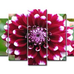 Red 5 Piece Wall Art Painting Red Dahlia Pictures Prints On Canvas Flower The Picture Decor Oil For Home Modern Decoration Print For Bedroom