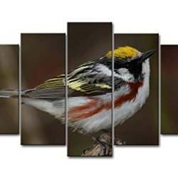 5 Piece Wall Art Painting Chestnut-Sided And White Warbler Pictures Prints On Canvas Animal The Picture Decor Oil For Home Modern Decoration Print For Girls Room
