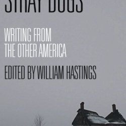 Stray Dogs: Writing From The Other America