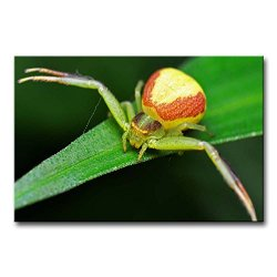 Green Wall Art Painting Crab Spider In The Leaf Pictures Prints On Canvas Animal The Picture Decor Oil For Home Modern Decoration Print For Bedroom