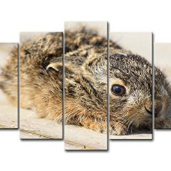 5 Panel Wall Art Painting Grey Mixed Brown Bunnies Baby Animal Prints On Canvas The Picture Animal Pictures Oil For Home Modern Decoration Print Decor