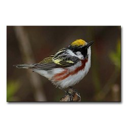 Wall Art Painting Chestnut-Sided And White Warbler Pictures Prints On Canvas Animal The Picture Decor Oil For Home Modern Decoration Print For Girls Room