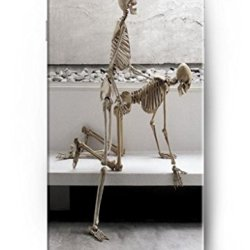 Ouo New Unique Vintage Hard Cover For 4.7 Inch Iphone 6 Case Skeleton Doing Sex