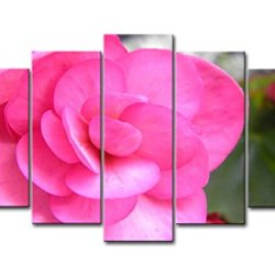 Pink 5 Piece Wall Art Painting Pink Begonia Pictures Prints On Canvas Flower The Picture Decor Oil For Home Modern Decoration Print For Items