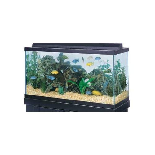 All Glass Aquarium Co. 75 Gallon Tank Black 48 X 18 X 20 : Amazon.com