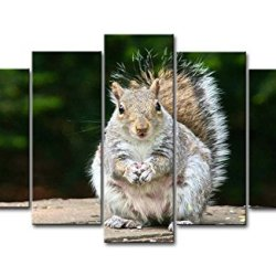 5 Panel Wall Art Painting Cute Fluffy Squirrel Prints On Canvas The Picture Animal Pictures Oil For Home Modern Decoration Print Decor