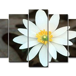 5 Piece Wall Art Painting White Bloodroot With Yellow Stamen Prints On Canvas The Picture Flower Pictures Oil For Home Modern Decoration Print Decor For Bedroom