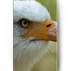 Ouo Stylish Series Case For Iphone 5 5S 5G With The Design Of Profile Of A Eagle