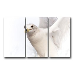 3 Panel Wall Art Painting Pure White Dove Pictures Prints On Canvas Animal The Picture Decor Oil For Home Modern Decoration Print