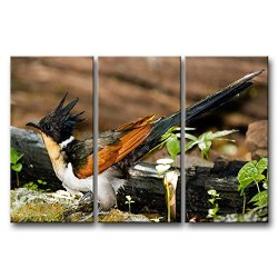 3 Panel Wall Art Painting Chestnut-Winged Cuckoo Pictures Prints On Canvas Animal The Picture Decor Oil For Home Modern Decoration Print For Furniture
