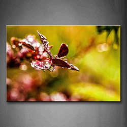 Water Drops On The Plants Leaves Like Butterfly Wall Art Painting The Picture Print On Canvas Art Pictures For Home Decor Decoration Gift