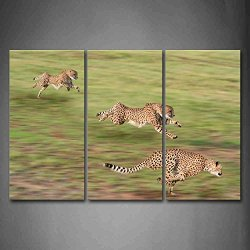 Three Cheetahs Are Running On Grassland Wall Art Painting The Picture Print On Canvas Animal Pictures For Home Decor Decoration Gift