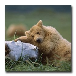 Brown Wall Art Painting Bear Sleeping Alaska Pictures Prints On Canvas Animal The Picture Decor Oil For Home Modern Decoration Print