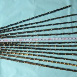 10 Black Bamboo Sticks For Making Horse Whips Or Other