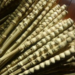"""10 Budhha Bamboo Sticks For Making Bamboo Pipe Or Horse Whips 60Cm/23.6"""""""