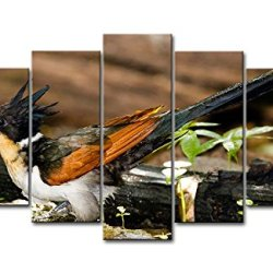 5 Piece Wall Art Painting Chestnut-Winged Cuckoo Pictures Prints On Canvas Animal The Picture Decor Oil For Home Modern Decoration Print For Furniture