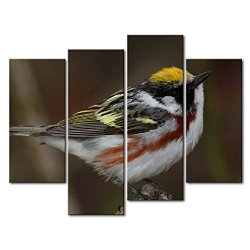 4 Panel Wall Art Painting Chestnut-Sided And White Warbler Pictures Prints On Canvas Animal The Picture Decor Oil For Home Modern Decoration Print For Girls Room